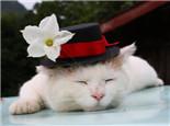 好睡眠帮助猫咪健康成长
