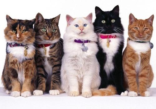壁纸 动物 狗 狗狗 猫 猫咪 小猫 桌面 500_350