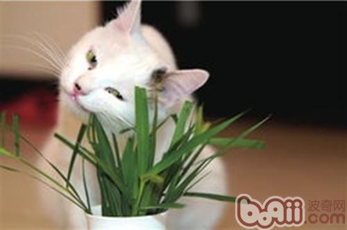 猫咪恼人毛球问题全解析