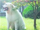 如何帮狗狗克服恐惧感