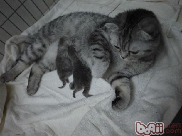 两只小老鼠一样的幼猫,你有信心自己养活吗?