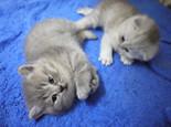 幼年猫咪生长所需的特殊营养需求