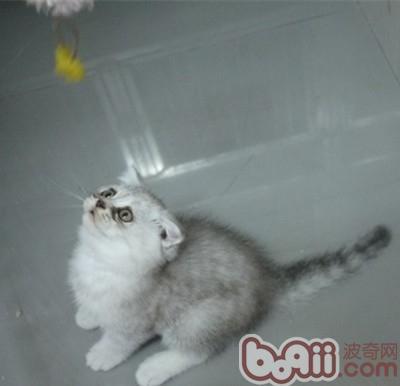 6周龄了,是不是长大很多啊,已经开始吃猫粮两周了,因为猫妈妈奶水不足,所以很早就开始使用猫粮了,结果小猫咪长的更快了,是不是一个惊喜呐?