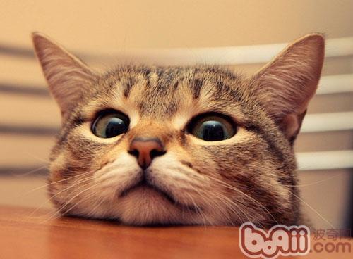壁纸 动物 猫 猫咪 小猫 桌面 500_368