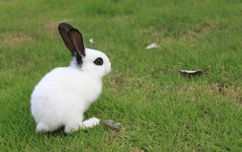 宠物兔兔怎么养