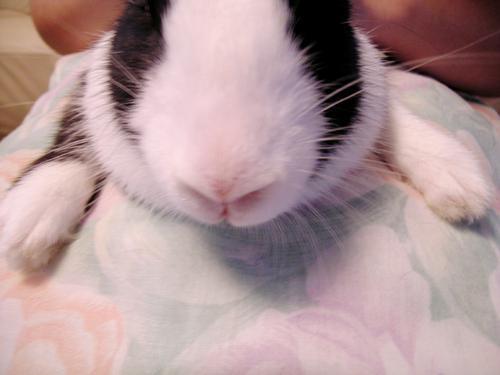 如何训练兔兔不怕剪指甲