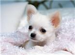 导致狗狗子宫蓄脓的常见原因