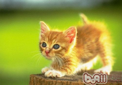 拱背炸毛的小猫到底在干吗|猫咪养护