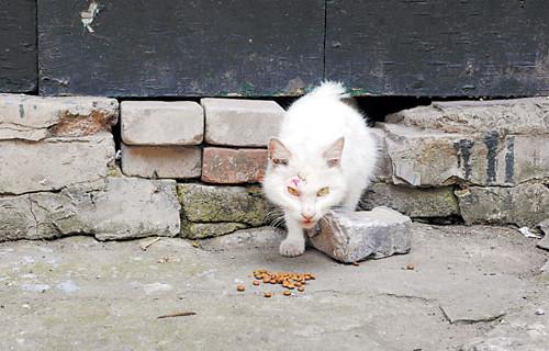 """为何猫咪会""""恋家""""?"""