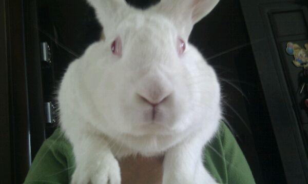 如何确定你的兔兔得了大肠杆菌病