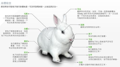 可爱兔兔直播勾搭在哪