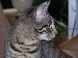 猫咪的眼睛晚上为什么发亮
