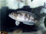 观赏鱼白线虫病的原因及解决方法