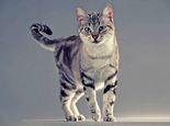 猫咪尾巴竖起来代表什么
