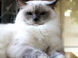 宠物猫害怕时的具体表现