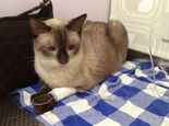 猫瘟热的诊断与防治