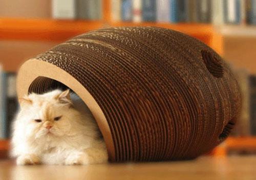 猫咪需要不止一张床