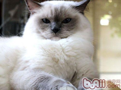 猫咪害怕时有哪些表现?关注爱猫,一起来了解下吧!