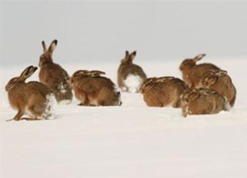 秋季兔兔配种要注意