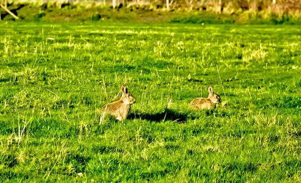 兔兔的小动作表达的大意思