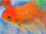 八种传统金鱼养殖容器
