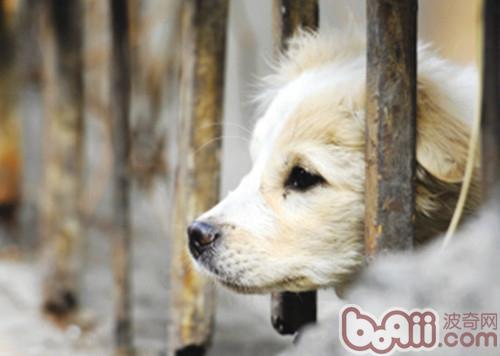 志愿者们自发组织的流浪动物之家毕竟能力有限,有些已经不堪重负