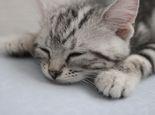 怎样照顾孤儿猫