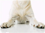 你的狗狗爪子健康吗?