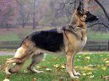 宠物营养师王天飞:雾霾天遛狗的三大提醒八项注意