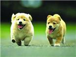 影响狗狗个性的原因分析