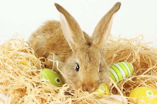 为兔兔打造舒适环境
