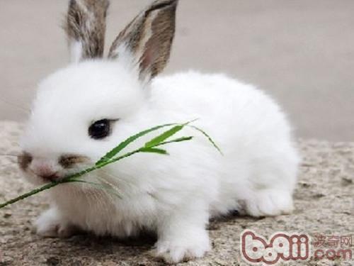 粮食粘贴画动物