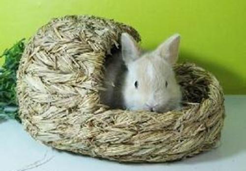 养兔新手必备物品
