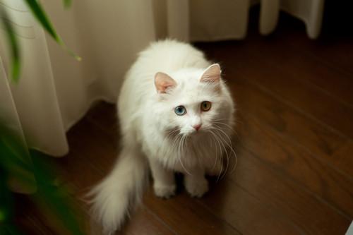 关于母猫的一妻多夫制分析