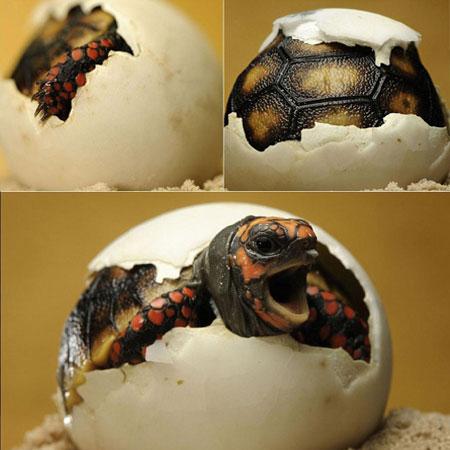 简单介绍一下龟龟需要的维生素