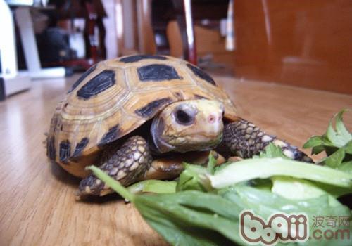 陆龟的食物可以放在冰箱里保存吗-轻博客