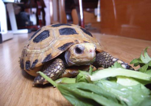 陆龟的食物可以放在冰箱里保存吗