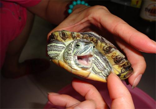 龟龟咬人吗?