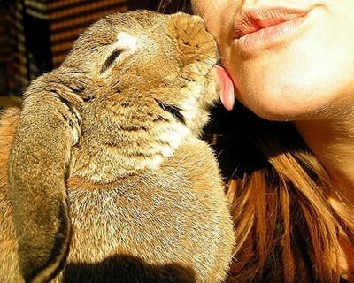 读懂兔兔的语言