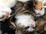 为什么志愿者要救助流浪动物