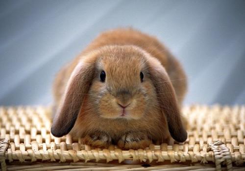 养兔兔应使用哪种垫料