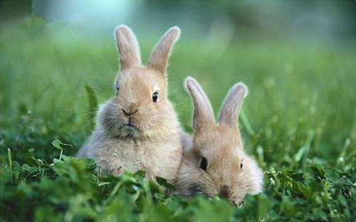 迅速检查兔兔健康有妙招