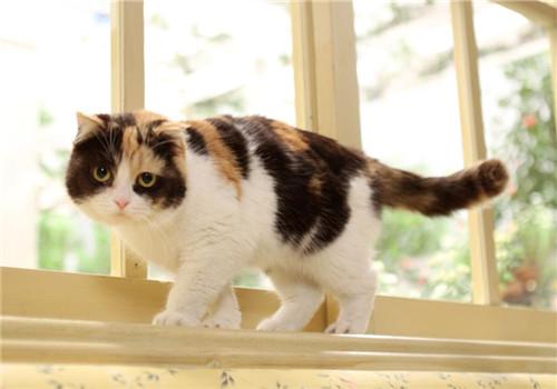 三色猫_雄性三色猫是没有繁殖能力的