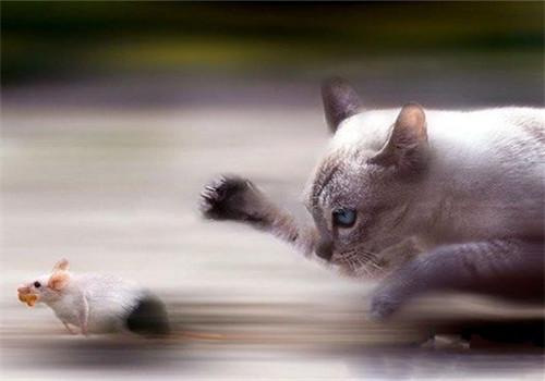 幼猫训练之主人应注意的事项
