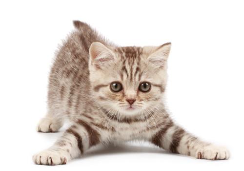 让猫猫学会听话