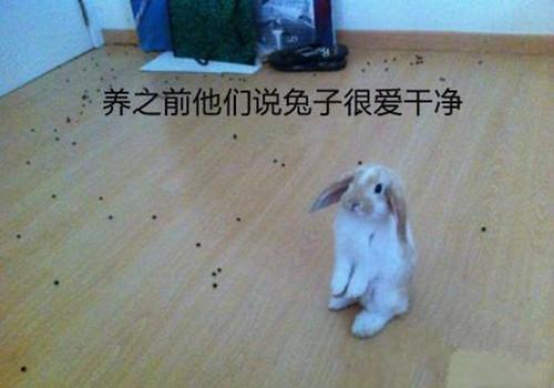 兔兔怎样才不臭?