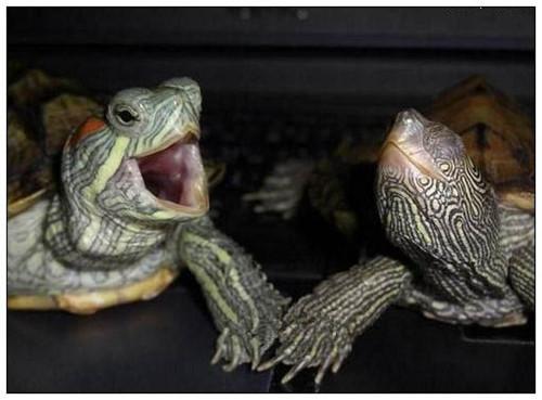 龟如何呼吸