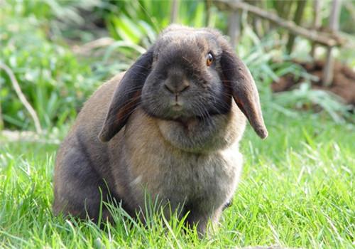 介绍几种廉价的兔饲料