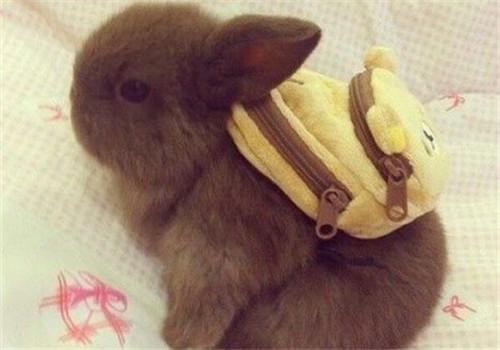 新生小兔子如何照顾
