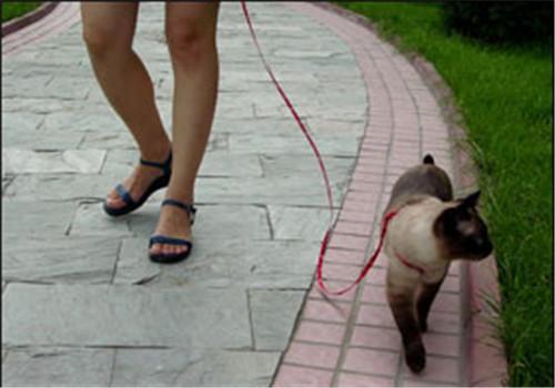 训练必威体育appios和你一起散步